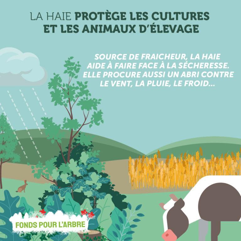 Pour l'agriculture